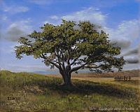 Original Landscape Oil Painting titled 'Big Cork Tree' by John O'Keefe Jr.
