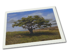 Giclee on Paper titled 'Big Cork Tree' by John O'Keefe Jr.