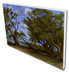 Giclee on Canvas titled 'Old Olive Tree Path' by John O'Keefe Jr.
