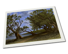Giclee on Paper titled 'Old Olive Tree Path' by John O'Keefe Jr.