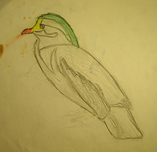 John O'Keefe's early colored pencil drawing of duck, created when he was seven years old