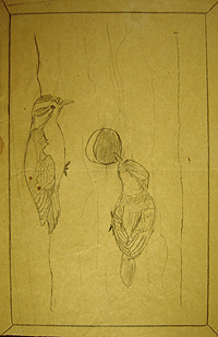John O'Keefe's early pencil drawing of two woodpeckers, created when he was eight or nine years old