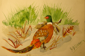 John O'Keefe's early watercolor of a fowl, created when he was nine or ten years old