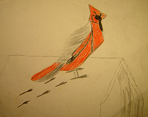 John O'Keefe's early colored pencil drawing of a cardinal, created when he was seven years old
