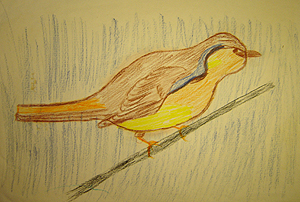 John O'Keefe's early colored pencil drawing of a bird, created when he was seven years old