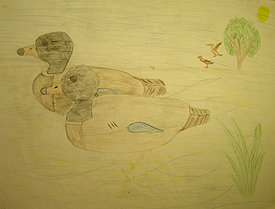 John O'Keefe's early colored pencil drawing of ducks in a pond, created when he was seven years old