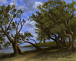 Painting tutorial for 'Old Olive Tree Path' by John O'Keefe Jr. - Day 6