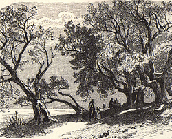 Painting tutorial for 'Old Olive Tree Path' by John O'Keefe Jr. - reference Victorian engraving
