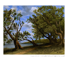 Finished oil painting: 'Old Olive Tree Path' by John O'Keefe Jr.